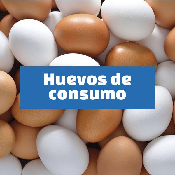 huevos-madrid