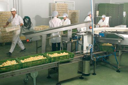 produccion-huevos