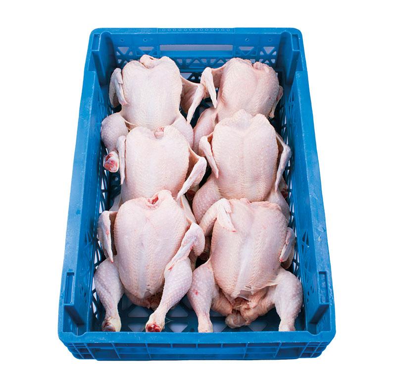 pollo-limpio-6unidades