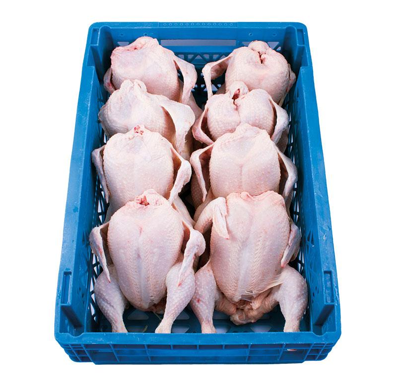 pollo-limpio-8unidades